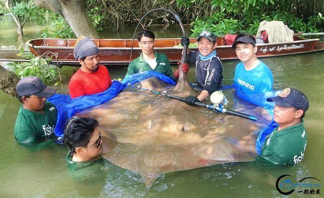 世界最巅峰的湄公河魔鬼鱼挑战赛,中国钓鱼人竟还是一片空白-23.jpg