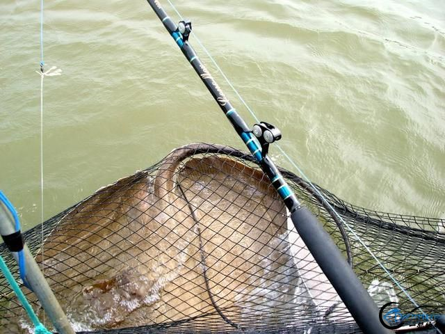 看过游钓湄公河的巨物后,再看游钓中国的渔获也许就只是笑话-10.jpg