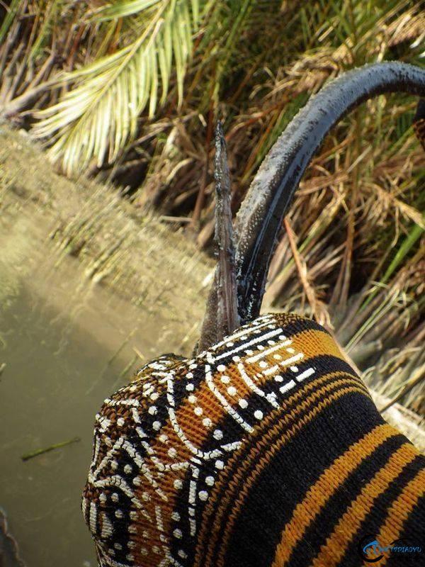 看过游钓湄公河的巨物后,再看游钓中国的渔获也许就只是笑话-17.jpg