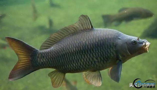 钓鱼时你注意过饵料颜色吗,红黄白三色,哪种最适合野钓?-2.jpg