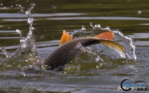 钓鱼:遛鱼是一门大学问-9.jpg