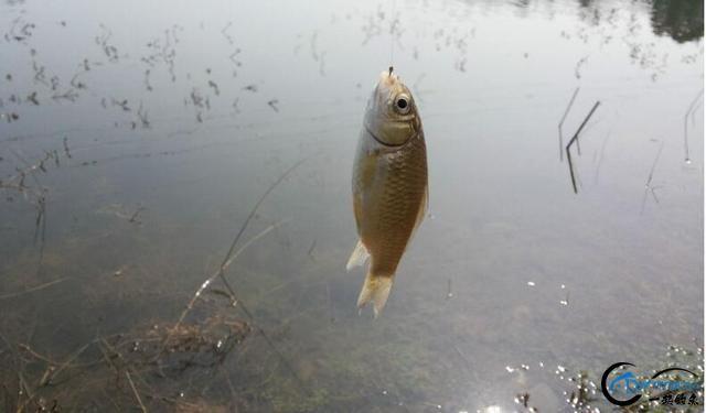 深浅交汇钓坎,水草稠密钓边,这两处都是冬季藏鱼的好位置-1.jpg