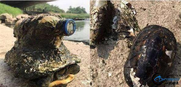 男子钓鱼时河里有塑料瓶不断在动,捞起来一看真的是太气人了!-1.jpg