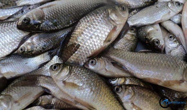 这种鱼颜色真多,长相看起来和普通鱼一样,就是尾巴有点长-4.jpg