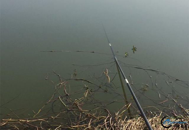 钓鱼没那么多套路,这条大板鲫大不大一眼就知道,不用看桶的大小-1.jpg