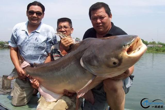 湄公河才是钓鱼人的天堂,让大家见识一下什么才叫真正的钓鱼-17.jpg