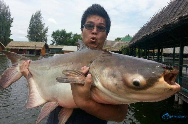 湄公河才是钓鱼人的天堂,让大家见识一下什么才叫真正的钓鱼-15.jpg