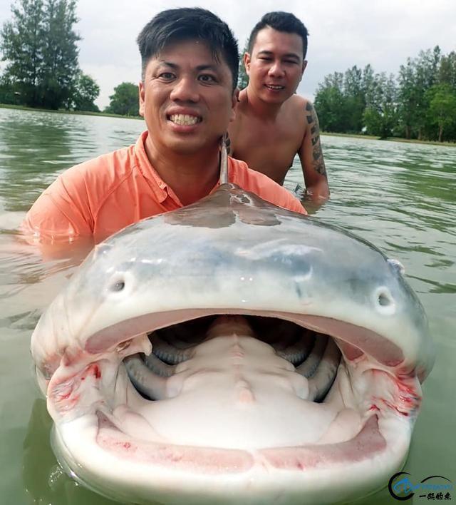 湄公河才是钓鱼人的天堂,让大家见识一下什么才叫真正的钓鱼-5.jpg