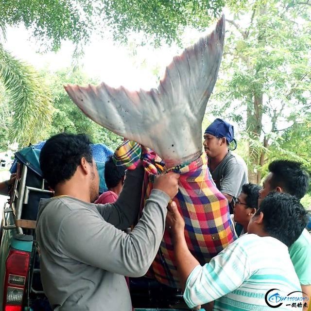 湄公河才是钓鱼人的天堂,让大家见识一下什么才叫真正的钓鱼-10.jpg