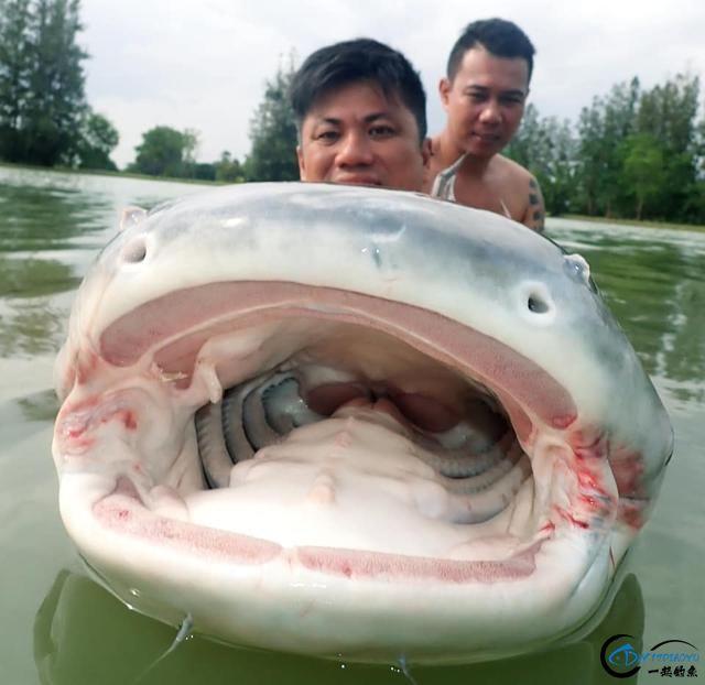 湄公河才是亚洲最终极的钓场,一不小心就会钓获这些水中巨怪-6.jpg