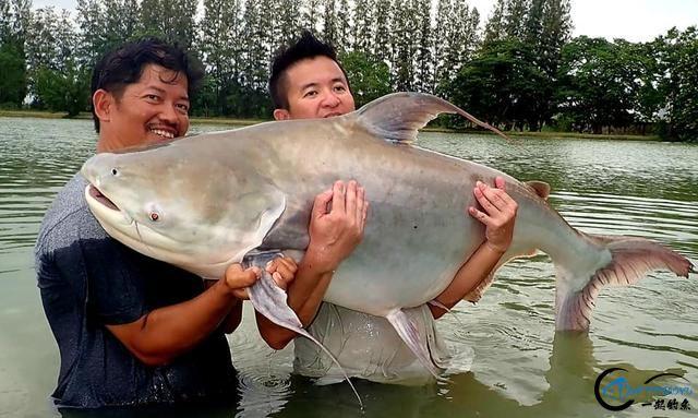 湄公河才是亚洲最终极的钓场,一不小心就会钓获这些水中巨怪-14.jpg