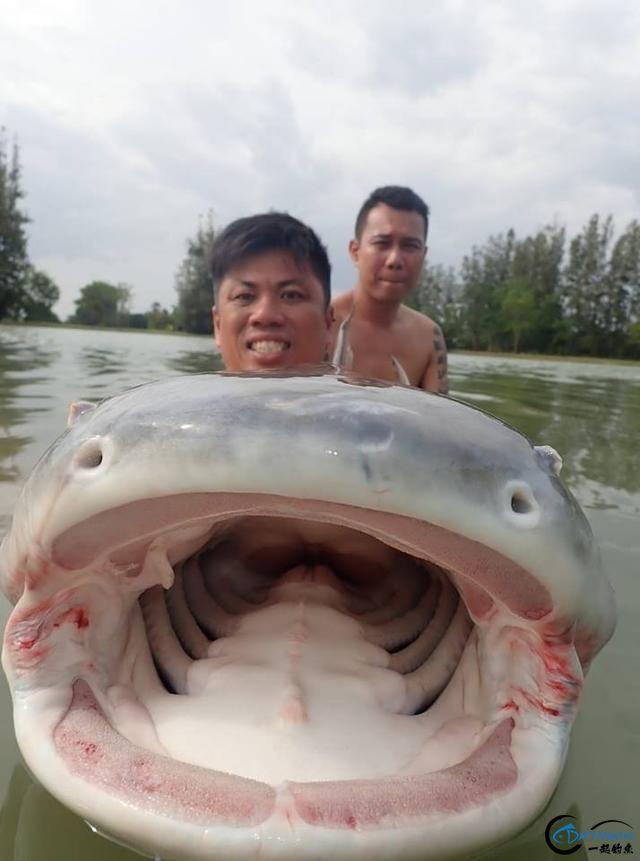 湄公河才是亚洲最终极的钓场,一不小心就会钓获这些水中巨怪-8.jpg