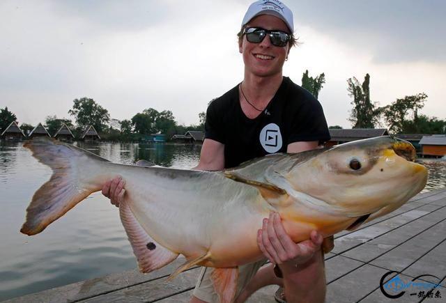 湄公河才是亚洲最终极的钓场,一不小心就会钓获这些水中巨怪-16.jpg