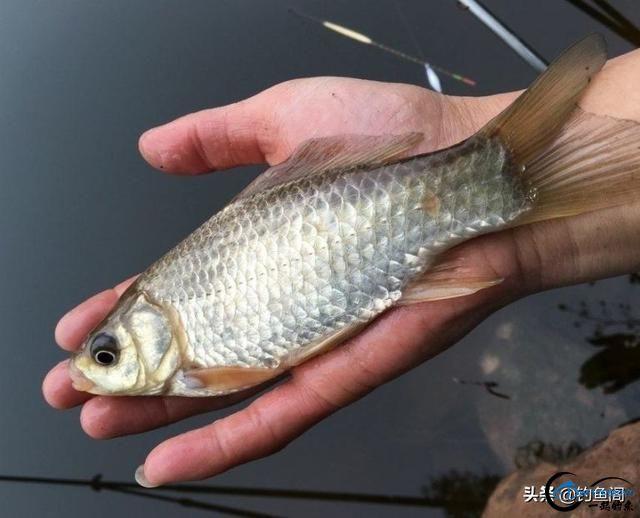 10分钟自制鱼饵,野钓专攻底层大鱼,少有杂鱼闹窝-3.jpg