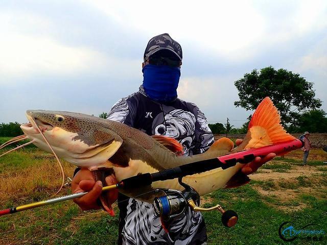 国内无数观赏鱼爱好者钟爱的招财猫,在泰国却是钓鱼人的最爱-2.jpg