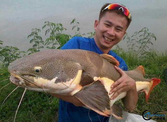 国内无数观赏鱼爱好者钟爱的招财猫,在泰国却是钓鱼人的最爱-27.jpg