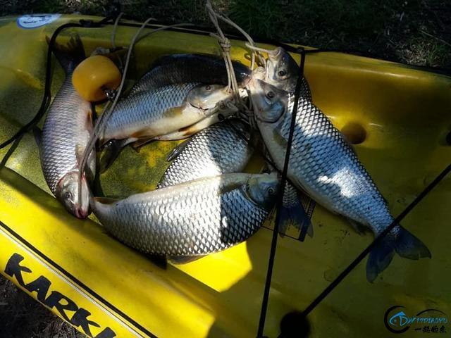 你真的相信国外钓鱼人最后会将渔获放生吗?别傻啦,你上当了-6.jpg