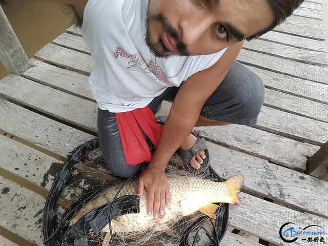 美国泛滥的亚洲鲤鱼好日子这次真的结束了,被消灭只是时间问题-5.jpg