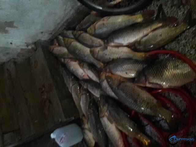 美国泛滥的亚洲鲤鱼好日子这次真的结束了,被消灭只是时间问题-10.jpg