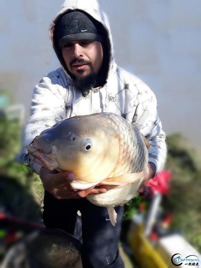 美国泛滥的亚洲鲤鱼好日子这次真的结束了,被消灭只是时间问题-3.jpg