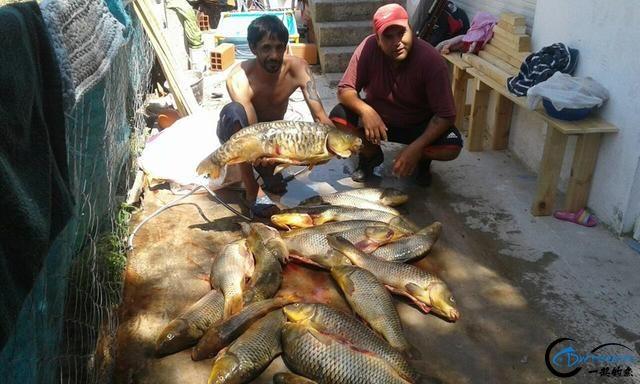 美国泛滥的亚洲鲤鱼好日子这次真的结束了,被消灭只是时间问题-23.jpg