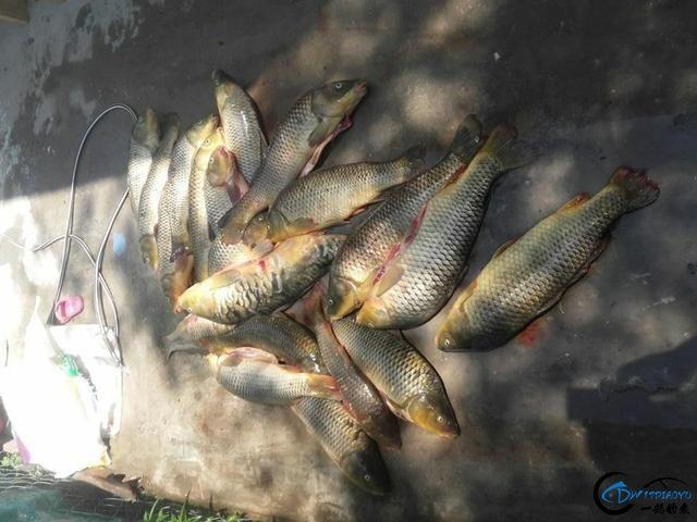 美国泛滥的亚洲鲤鱼好日子这次真的结束了,被消灭只是时间问题-24.jpg