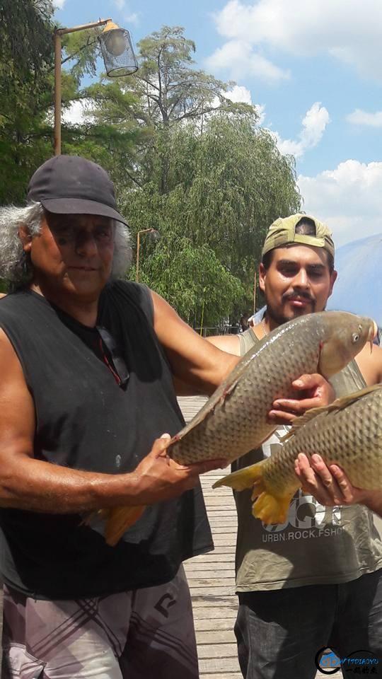美国泛滥的亚洲鲤鱼好日子这次真的结束了,被消灭只是时间问题-20.jpg