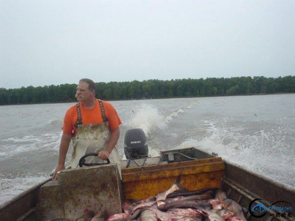 美国泛滥的亚洲鲤鱼好日子这次真的结束了,被消灭只是时间问题-26.jpg