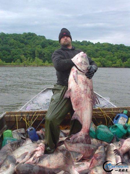 美国泛滥的亚洲鲤鱼好日子这次真的结束了,被消灭只是时间问题-30.jpg