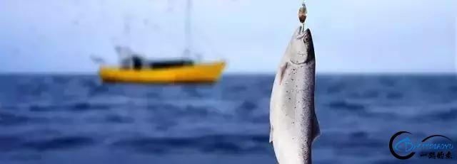 海钓人,想收获多多的、学学经验的举爪!-11.jpg