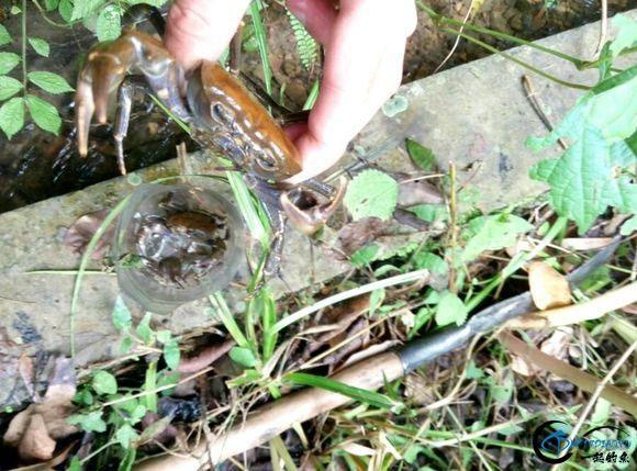 打工仔回到家乡,再钓一次故乡河里的小鱼-13.jpg