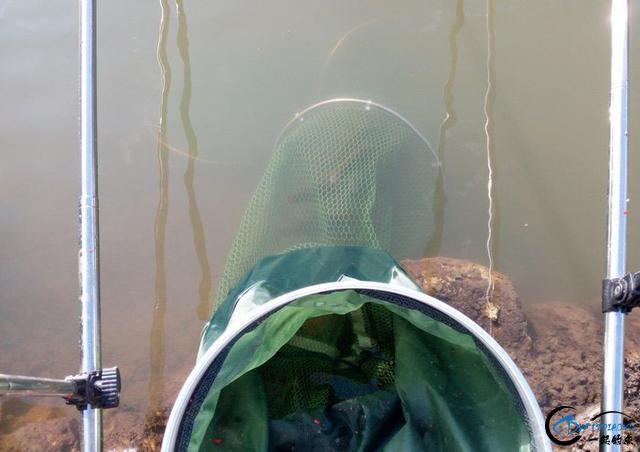 打工仔回到家乡,再钓一次故乡河里的小鱼-22.jpg