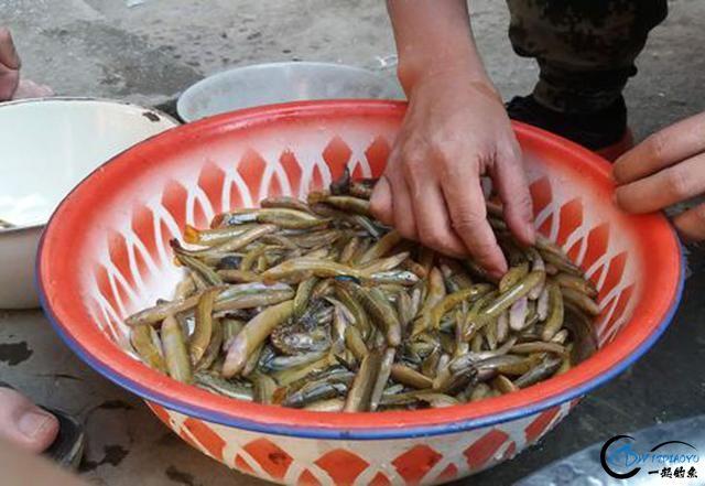 打工仔回到家乡,再钓一次故乡河里的小鱼-23.jpg