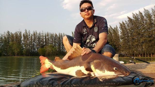 红尾鲶绝对是钓鱼人无法拒绝的诱惑,就连李大毛老师都不例外-12.jpg