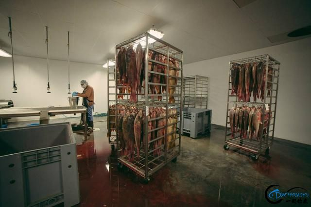 真有人将美国泛滥的亚洲鲤鱼卖到中国,但价格却让人无法接受-12.jpg