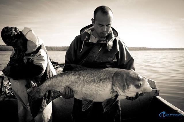 真有人将美国泛滥的亚洲鲤鱼卖到中国,但价格却让人无法接受-9.jpg