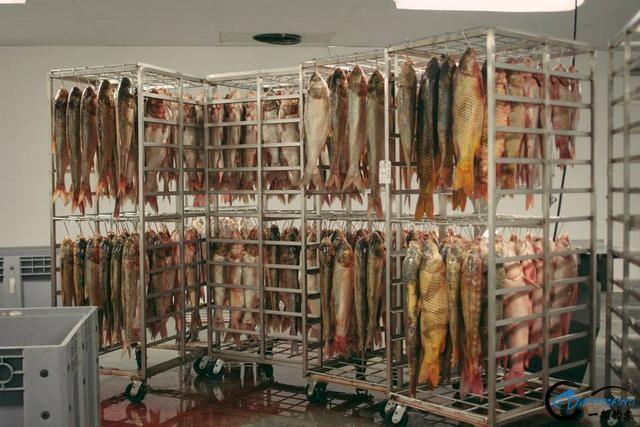 真有人将美国泛滥的亚洲鲤鱼卖到中国,但价格却让人无法接受-13.jpg