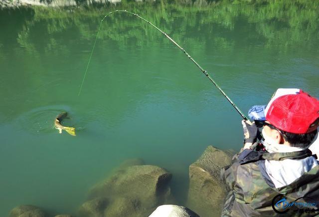 有幸钓过这种鱼的人非富即贵,家里没矿就别妄想能有机会去钓-6.jpg