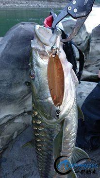 有幸钓过这种鱼的人非富即贵,家里没矿就别妄想能有机会去钓-24.jpg