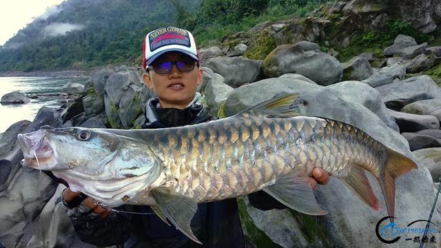 有幸钓过这种鱼的人非富即贵,家里没矿就别妄想能有机会去钓-27.jpg