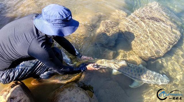 有幸钓过这种鱼的人非富即贵,家里没矿就别妄想能有机会去钓-26.jpg