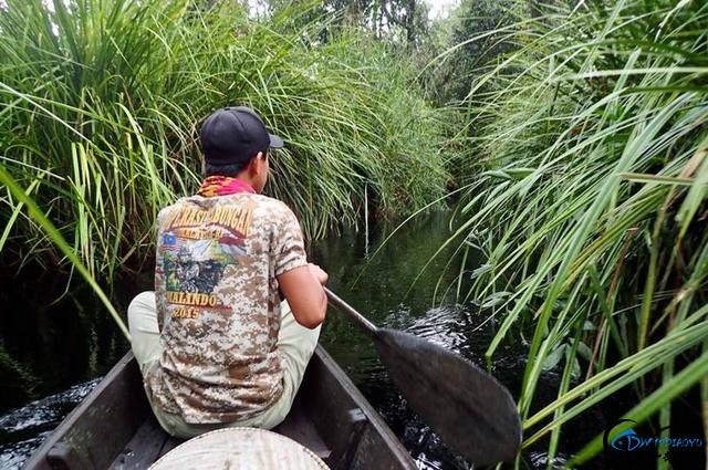 中国路亚钓鱼人远征苏门答腊,前去消灭泛滥成灾的金线多曼鱼-2.jpg