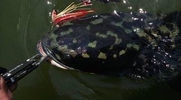 中国路亚钓鱼人远征苏门答腊,前去消灭泛滥成灾的金线多曼鱼-14.jpg