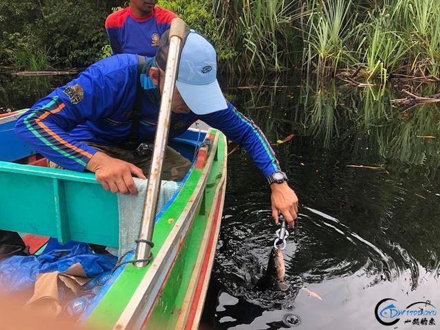中国路亚钓鱼人远征苏门答腊,前去消灭泛滥成灾的金线多曼鱼-3.jpg