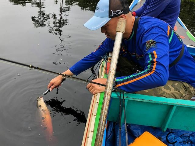 中国路亚钓鱼人远征苏门答腊,前去消灭泛滥成灾的金线多曼鱼-4.jpg
