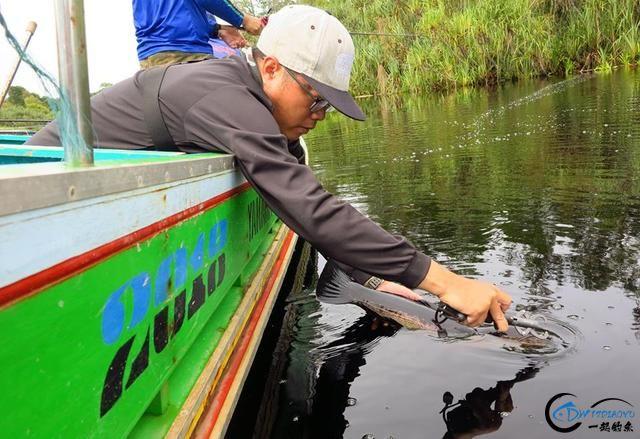中国路亚钓鱼人远征苏门答腊,前去消灭泛滥成灾的金线多曼鱼-5.jpg