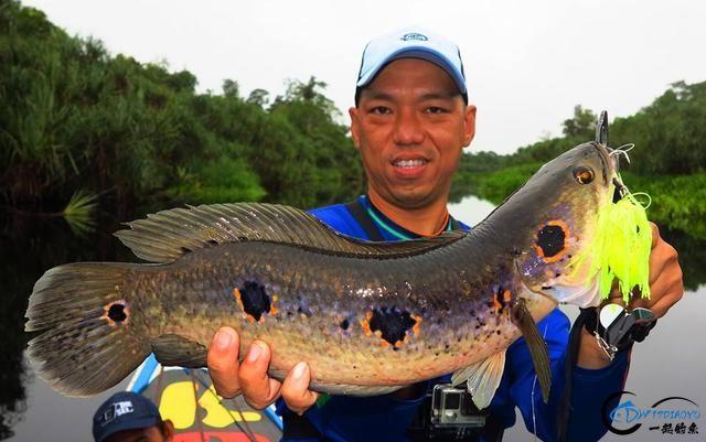 中国路亚钓鱼人远征苏门答腊,前去消灭泛滥成灾的金线多曼鱼-10.jpg