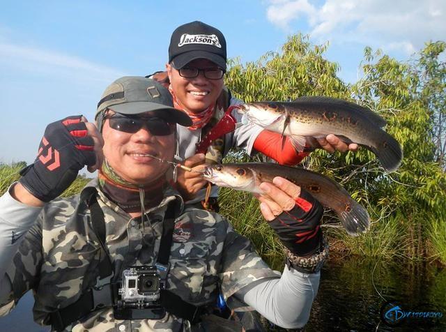 中国路亚钓鱼人远征苏门答腊,前去消灭泛滥成灾的金线多曼鱼-21.jpg