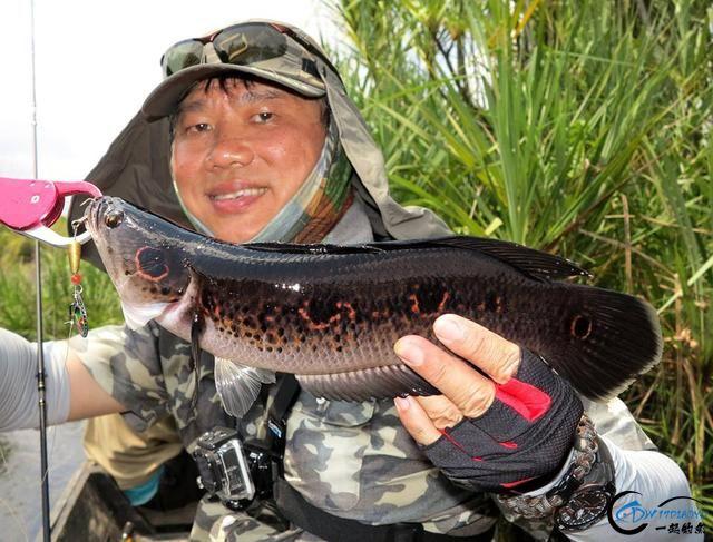 中国路亚钓鱼人远征苏门答腊,前去消灭泛滥成灾的金线多曼鱼-25.jpg