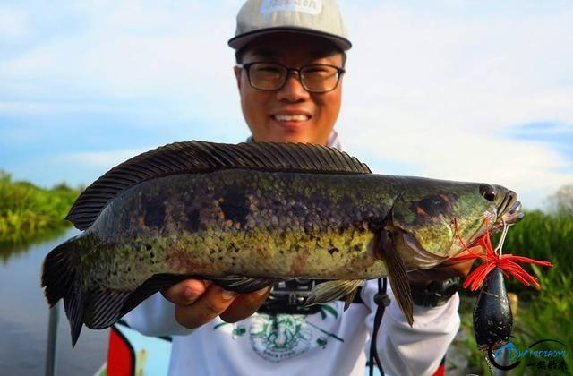 中国路亚钓鱼人远征苏门答腊,前去消灭泛滥成灾的金线多曼鱼-29.jpg